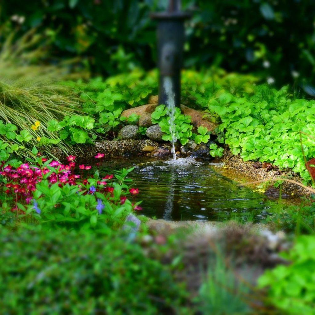 realizzazione biolaghi e laghetti da giardino