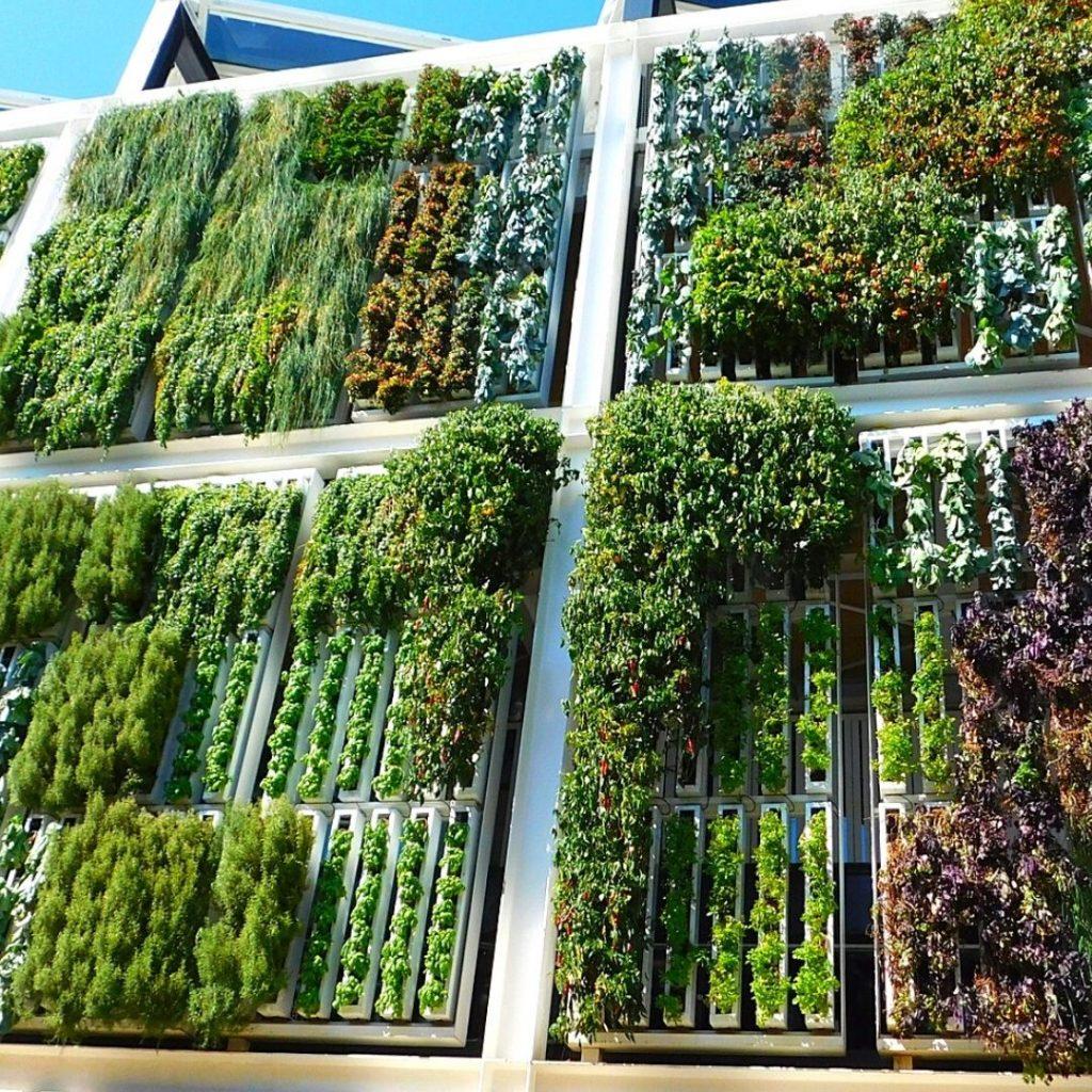 giardini pensili e verde verticale